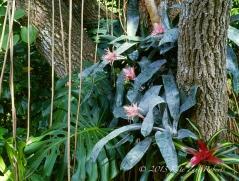Coral-Gables-Garden-3