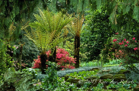 Tree-Ferns
