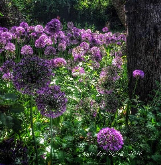 Boulder-Garden