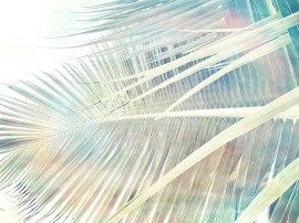 Palms,-Yucatan-2