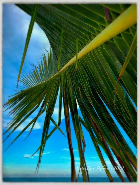 Palms,-Yucatan